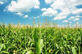 13-07-16-01 Agricultural/Farm Land for Sale in kusumanchi, Khammam Khammamrealestate.com